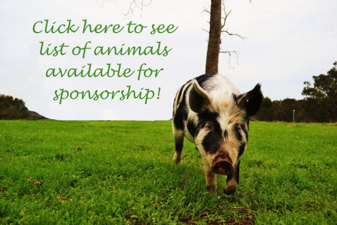 Sponsored animals website george