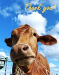 Thank you from all of us here at Happy Hooves Farm Sanctuary!