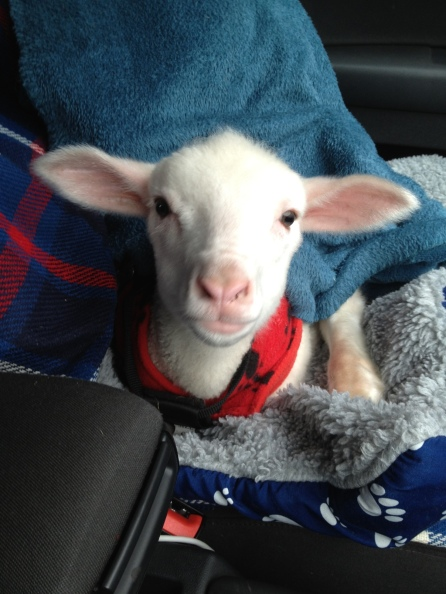 Timmy when he first arrived