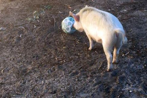 Peppa Ball2