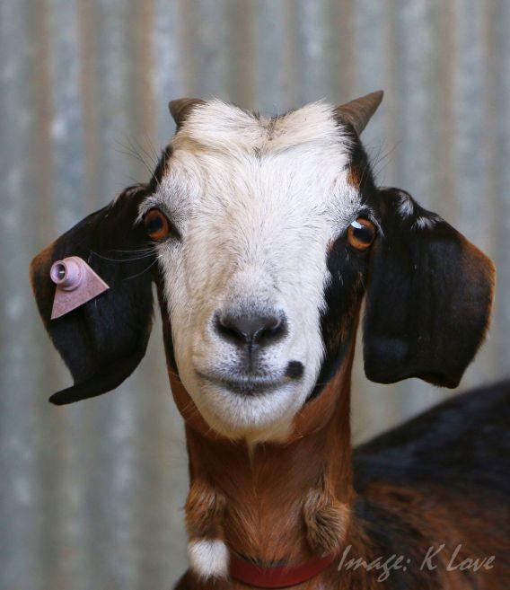 Betty Boop ears!