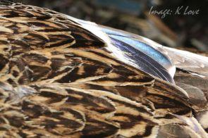 Stunning plumage