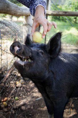 Apple? I LOVE apple!